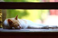 Cat sleep Stock Images