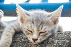 Cat Sleep Stock Images