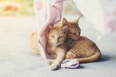 Cat sleep Royalty Free Stock Photography