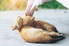 Cat sleep Royalty Free Stock Photos