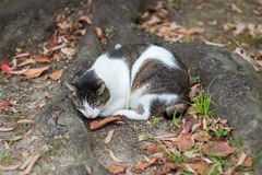 Cat sleep under the tree Stock Photography