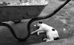 CAT SLEEP UNDER WHEEL BARROW royalty free stock images
