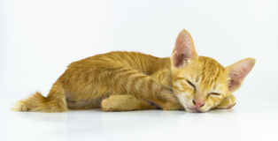 Cat sleep. On white background Stock Photography
