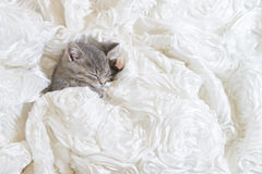 Cat sleep In white cloth Stock Photos