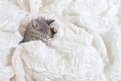 Cat sleep In white cloth Stock Photos