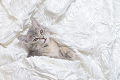 Cat sleep In white cloth Stock Image