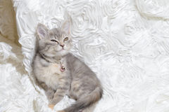 Cat sleep In white cloth Royalty Free Stock Images