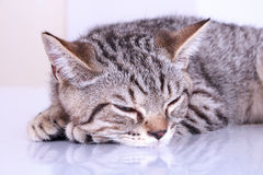Cat sleep on white table.  royalty free stock photography