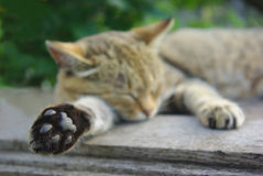 Cat sleeping. On the table Royalty Free Stock Photos