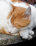 Cat sleeping Stock Photo