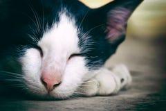 Cat Sleeping fotografía de archivo