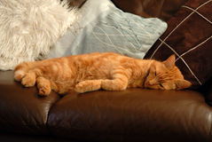 Cat Sleeping.