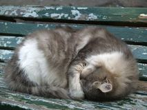 Cat Sleeping. Gray cat sleeping on a wooden bench Stock Photography