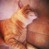 Cat Sleeping royalty-vrije stock afbeeldingen
