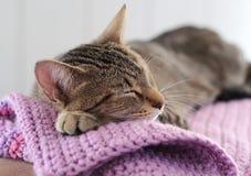Cat Sleeping Stockfotografie