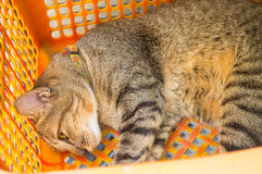 Cat Sleeping Fotografia Stock Libera da Diritti