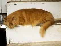 Cat Sleeping Lizenzfreie Stockfotografie