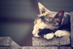 Cat Sleeping imagenes de archivo