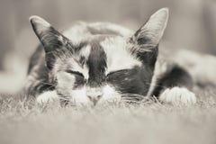 Cat Sleeping imagen de archivo libre de regalías