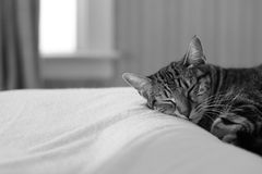 Cat Sleeping Photographie stock libre de droits