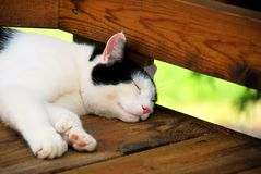 Cat sleeping. Black and white cat sleeps soundly on a wooden deck.  This is a six-toed cat Stock Images
