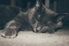 Cat. Is sleeping stock images
