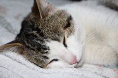 Cat Sleeping Images stock