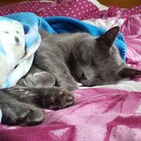 Cat Sleeping royalty-vrije stock foto's