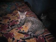 Cat Sleeping Photo stock