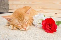 Cat Sleeping Imagen de archivo