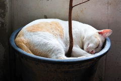 Cat Sleeping Foto de archivo