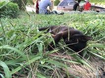 Cat Sleeping imágenes de archivo libres de regalías