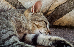 Cat Sleeping foto de archivo libre de regalías