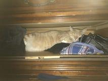 Cat Sleeping anaranjada en cajón fotografía de archivo libre de regalías