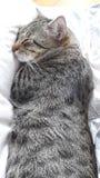 Cat sleeping Stock Photo