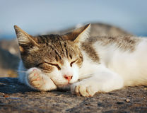 Cat sleeping on asphalt Royalty Free Stock Image