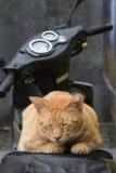 Cat Sleeping auf Motorrad Stockbilder