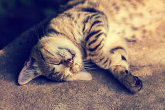 Cat sleeping on the back Royalty Free Stock Image