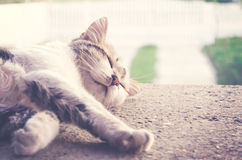 Cat sleeping in backyard close up. Cat sleeping in backyard  - close up - Cut out - Vintage look Royalty Free Stock Photos