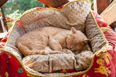 Cat sleeping in a basket Stock Images