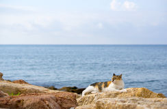 Cat is sleeping on the beach Royalty Free Stock Photo