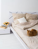 Cat sleeping on a bed Stock Photos