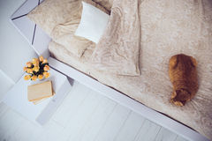 Cat sleeping on a bed Stock Images