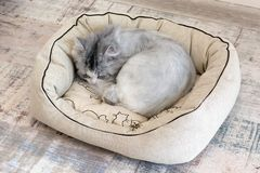 Cat sleeping in bed stock photography