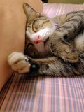 Cat sleeping on bed Stock Photography