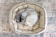 Cat sleeping in cat bed, view from above stock photo