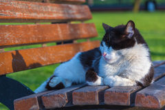 Cat sleeping on a bench Royalty Free Stock Photo