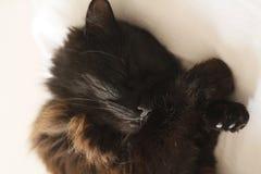 Cat sleeping royalty free stock photo