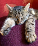Cat sleeping on a blanket Stock Photography
