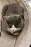 Cat sleeping in a boat. Grey and white cat sleeping in a wooden boat Royalty Free Stock Photography